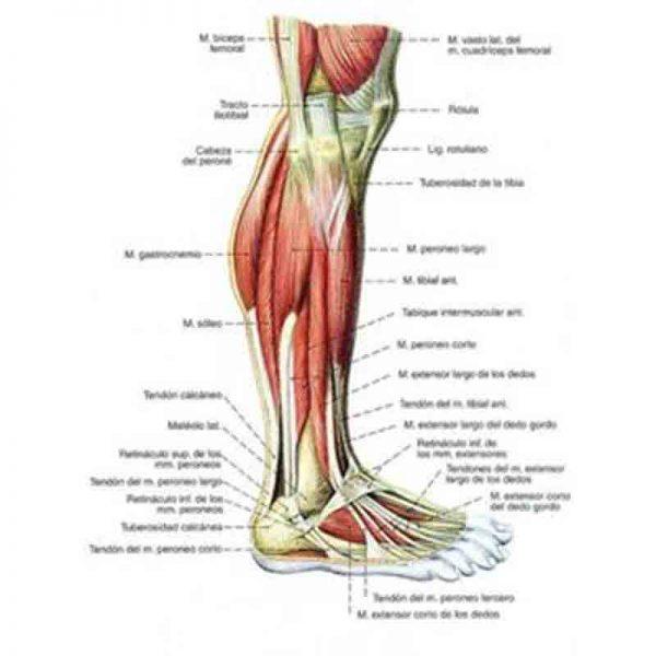 Workshop-Knees